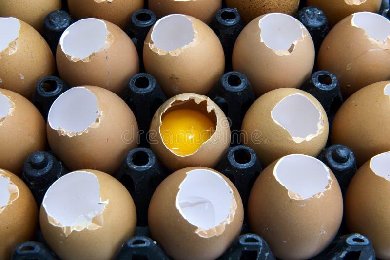 Uma bandeja de ovos, o ovo cru da maioria foto de stock
