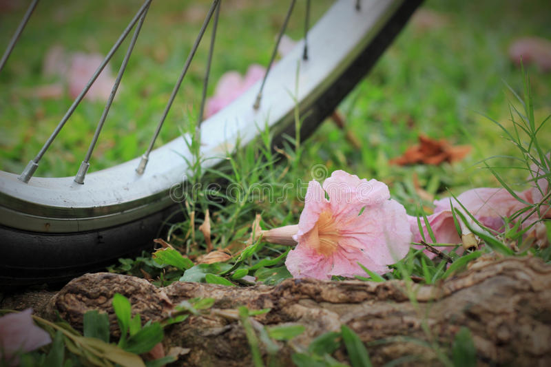 Uma bicicleta e flores na terra em um parque público fotos de stock royalty free