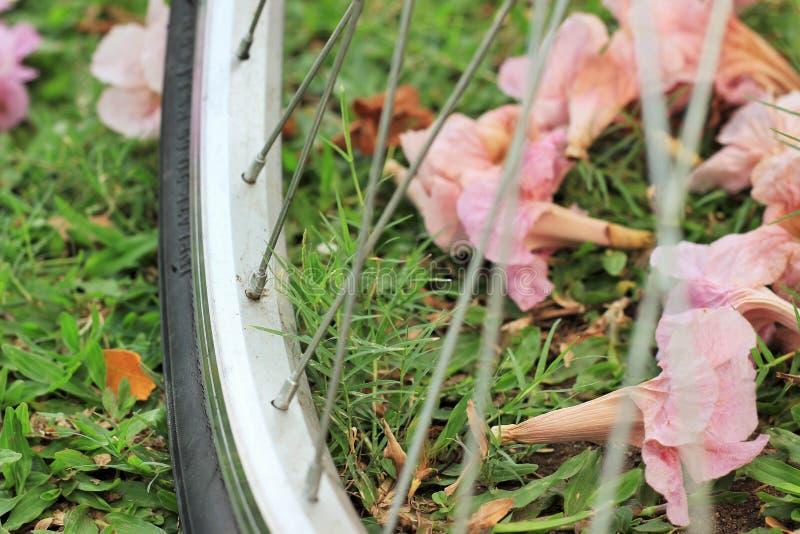 Uma bicicleta e flores na terra em um parque público fotos de stock