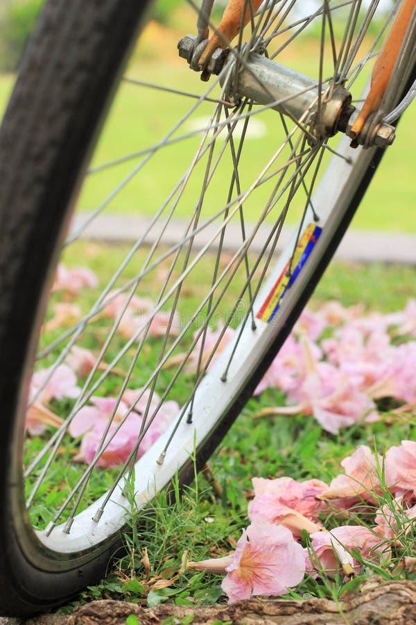 Uma bicicleta e flores na terra em um parque público foto de stock royalty free