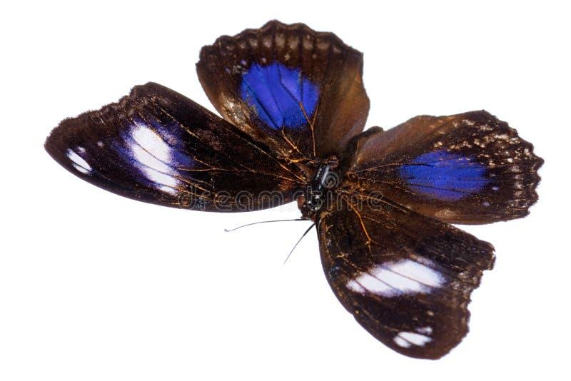 Uma borboleta bonita imagem de stock