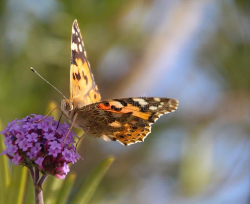 Uma borboleta em uma flor fotografia de stock royalty free