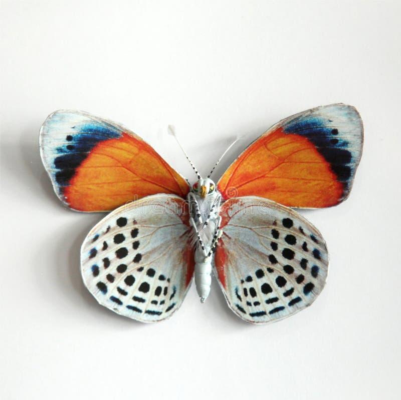 Uma borboleta gigante bonita fotografia de stock royalty free
