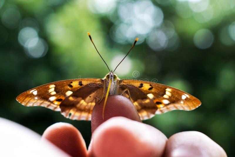 Uma borboleta muito bonita da borboleta, sentou-se em meus dedos em minha palma Um momento inesperado Natureza bonita Fotografia  imagens de stock