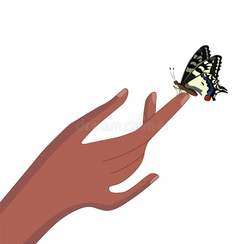 Uma borboleta senta-se em um dedo Swallowtail amarelo Isolado no fundo branco Imagem do vetor ilustração stock