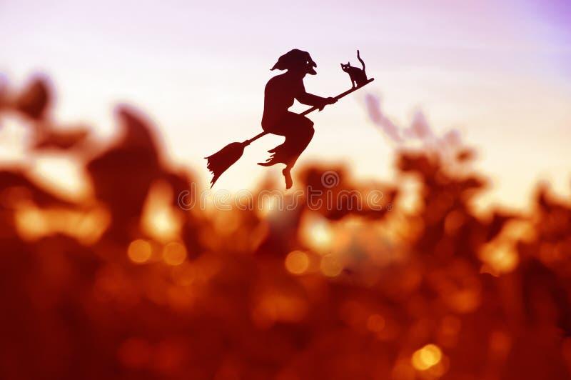 Uma bruxa de Halloween foto de stock royalty free