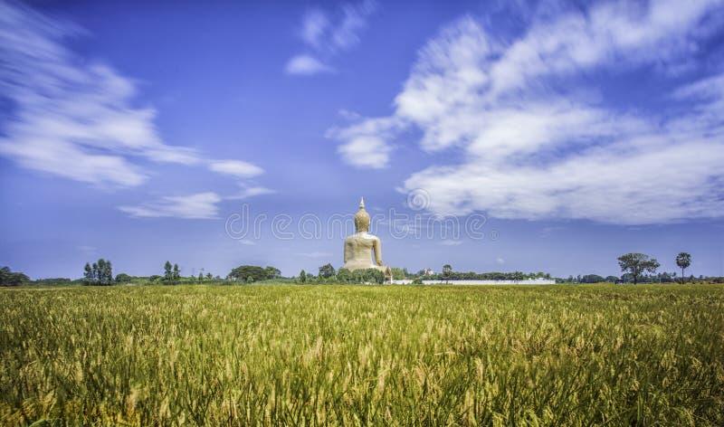 Uma Buda a mais grande em Tailândia fotografia de stock royalty free