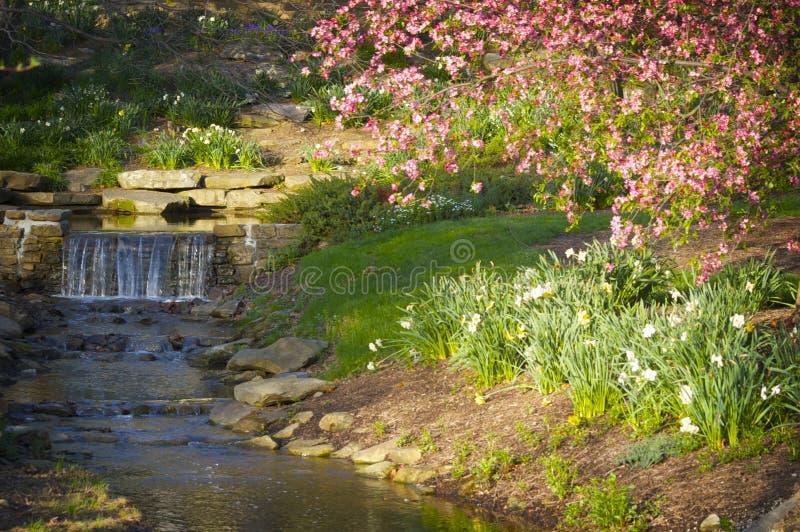Uma cachoeira delicada que entra em um córrego com mola cor-de-rosa floresce foto de stock