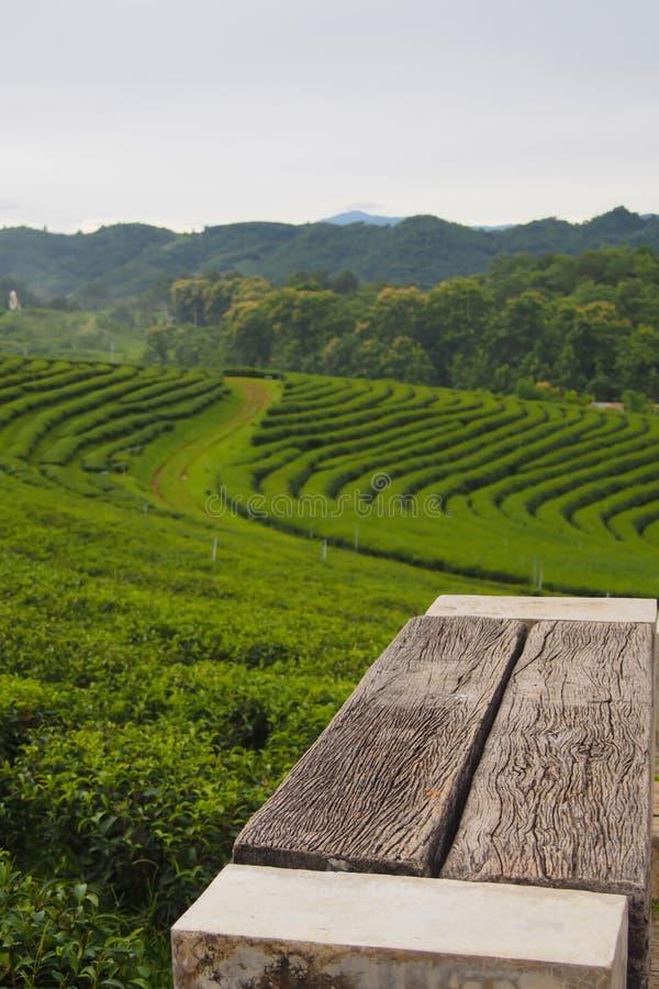 Uma cadeira de madeira vazia ajustada em uma plantação de chá verde é uma fileira perto da montanha imagem de stock