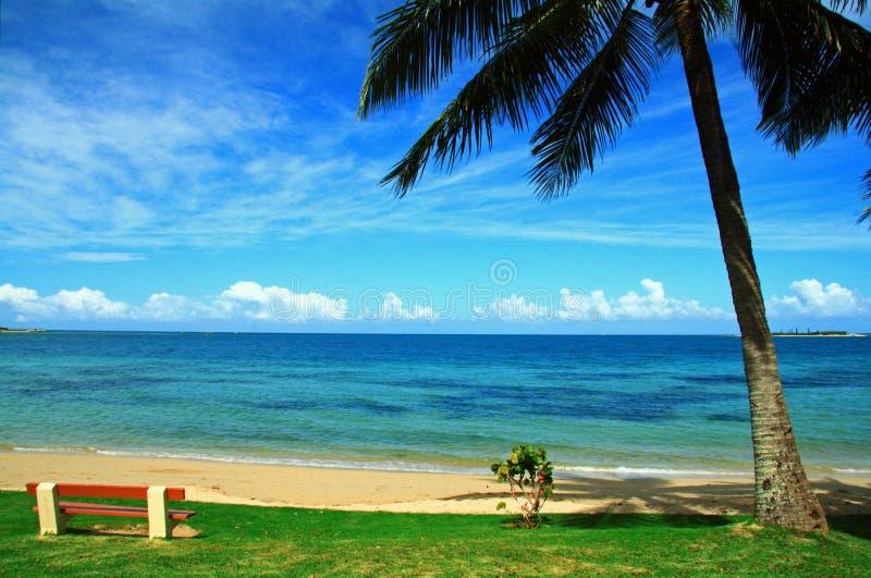 Uma cadeira vazia e uma palmeira na praia de Noumea foto de stock