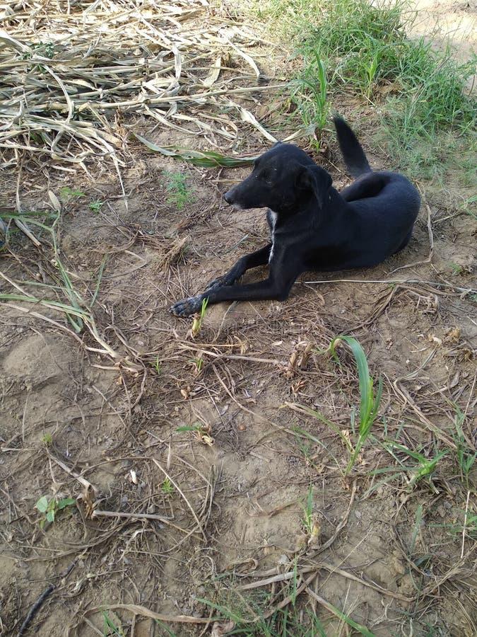 Uma cadela do stree que senta-se no campo imagens de stock royalty free