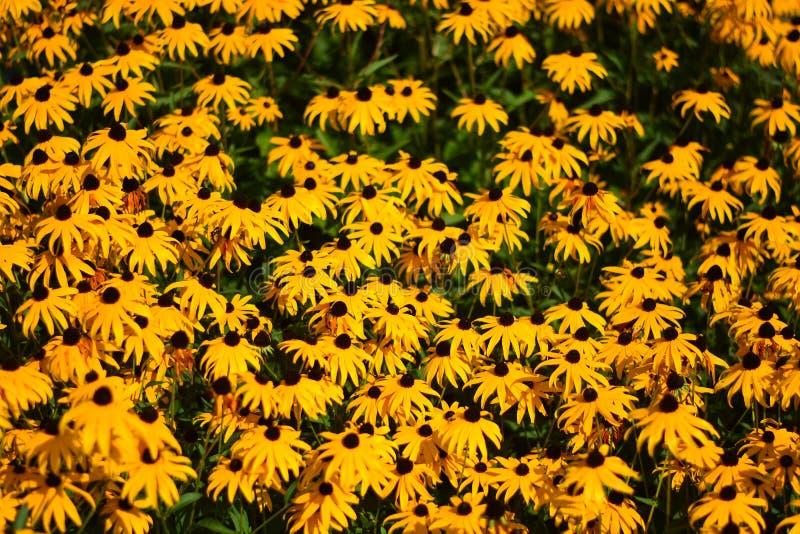 Uma cama de flores amarelas imagens de stock royalty free