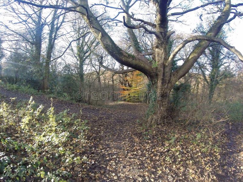Uma caminhada agradável do inverno nas madeiras fotografia de stock