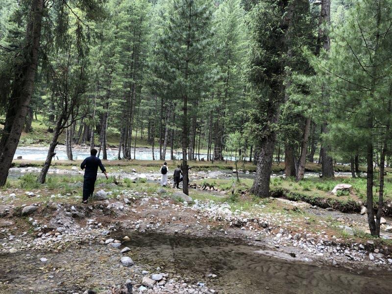 Uma caminhada através da floresta verde grossa fotos de stock royalty free