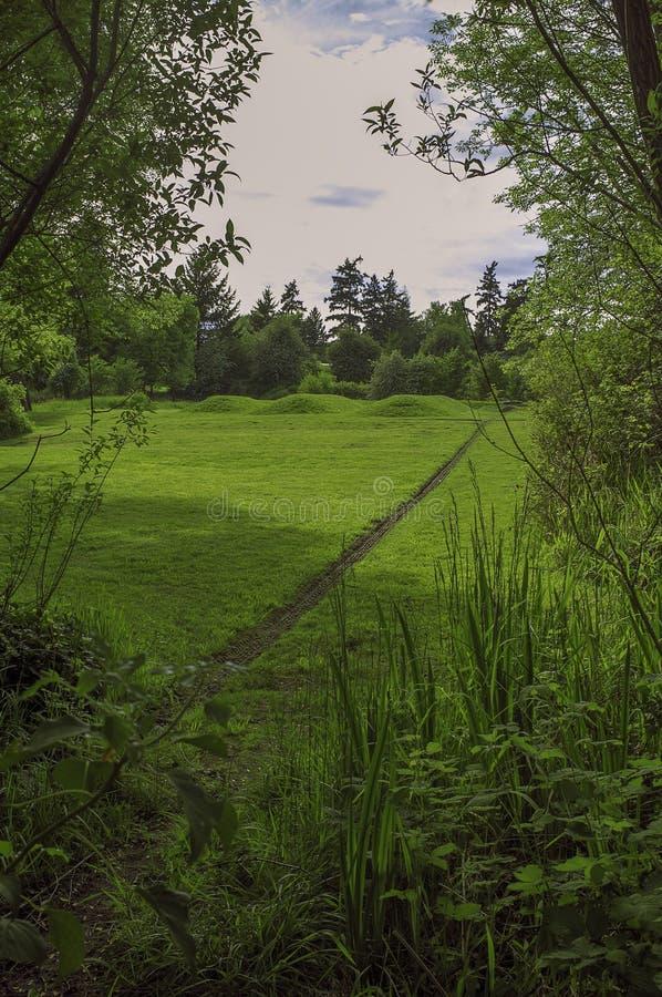 Uma caminhada mágica do verão no noroeste pacífico imagens de stock