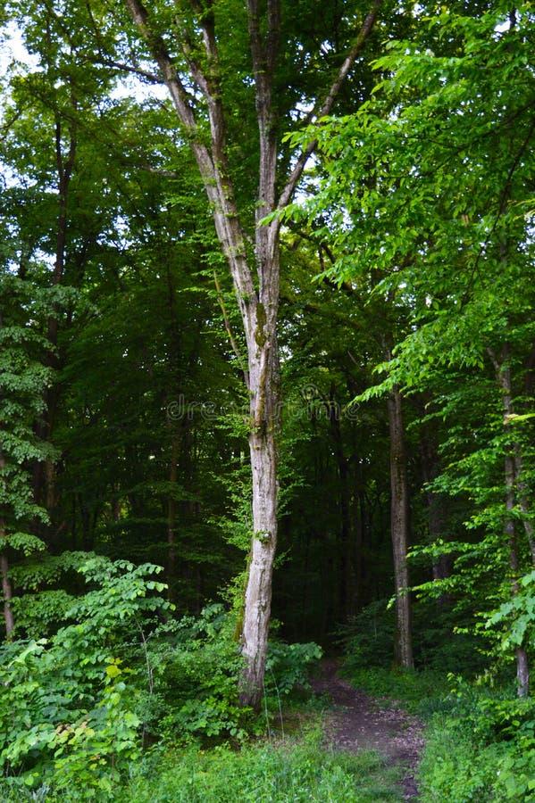 Uma caminhada na floresta imagens de stock
