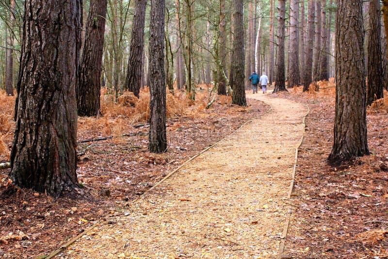 Download Uma caminhada nas madeiras foto de stock. Imagem de troncos - 12750108