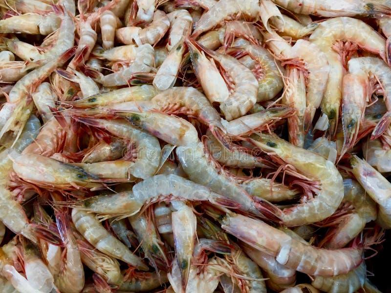 Uma captura de camarões fotos de stock royalty free