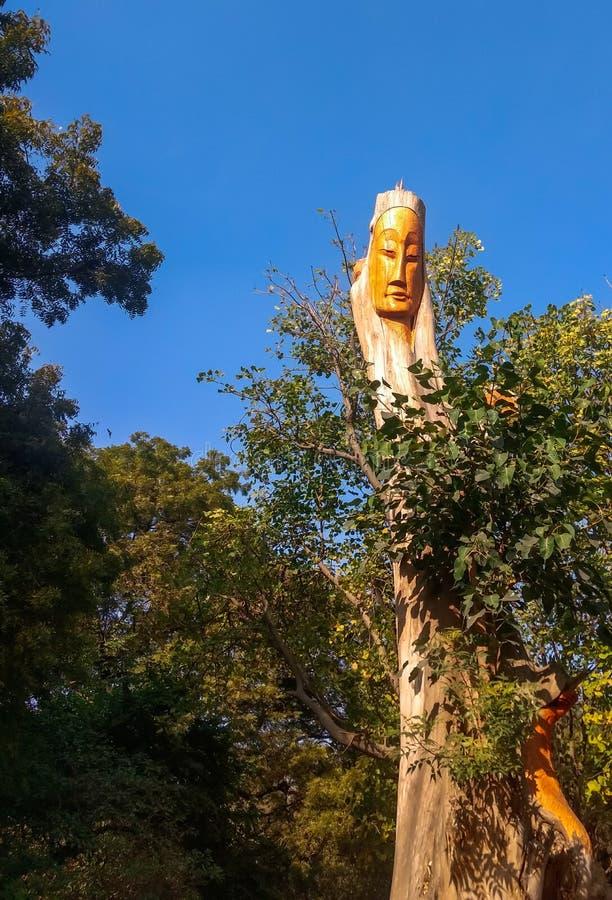 Uma cara cinzelou em uma árvore imagens de stock royalty free
