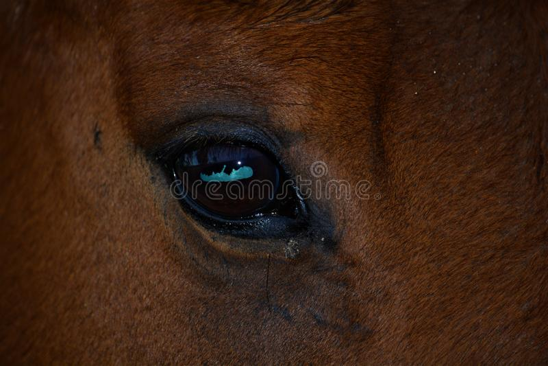 Uma cara disparada de um olho dos cavalos de baía fotos de stock