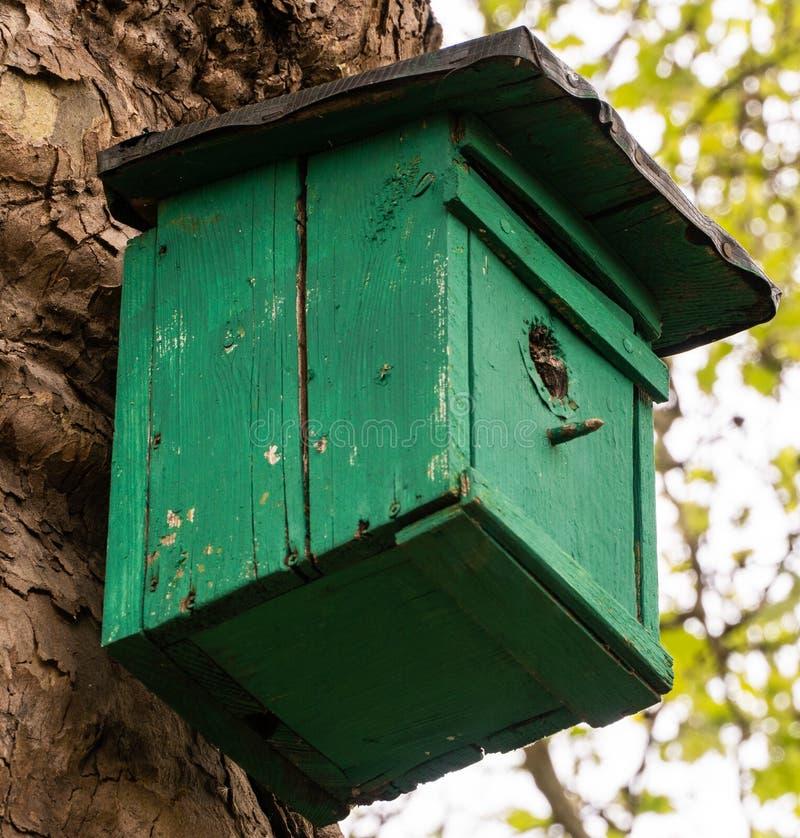 Uma casa verde para pássaros em uma árvore imagens de stock