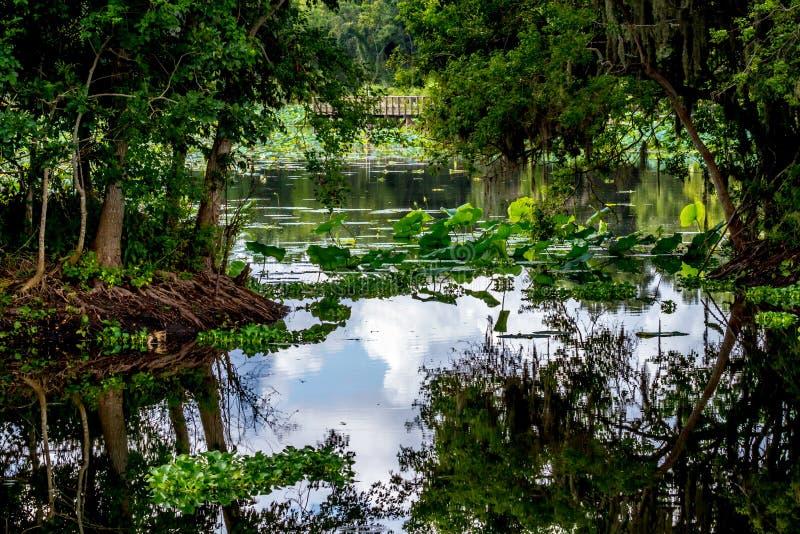 Uma cena bonita da natureza com uma doca da pesca, uma superfície vítreo do lago, umas árvores verdes, uns lírios de água, & um ja fotos de stock