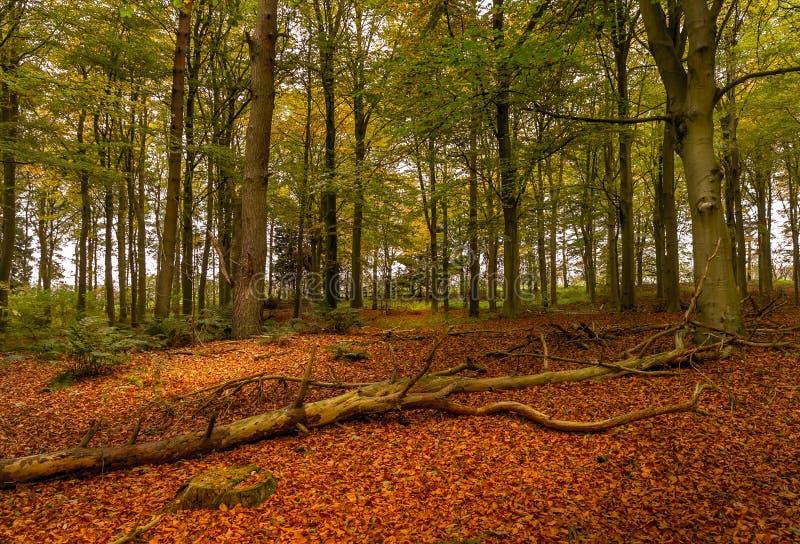 Uma cena outonal da floresta fotos de stock royalty free