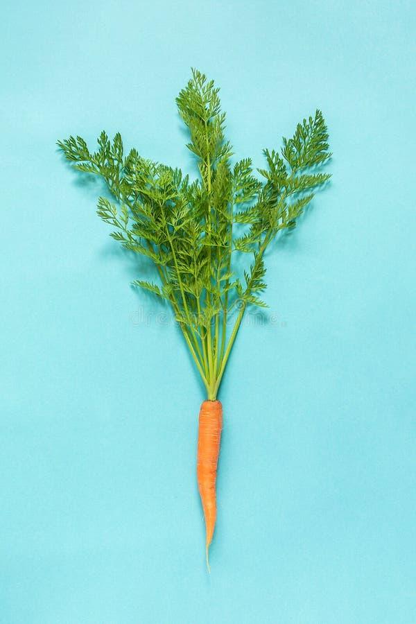 Uma cenoura suculenta alaranjada fresca com as partes superiores verdes luxúrias amarradas com corda no fundo azul imagem de stock