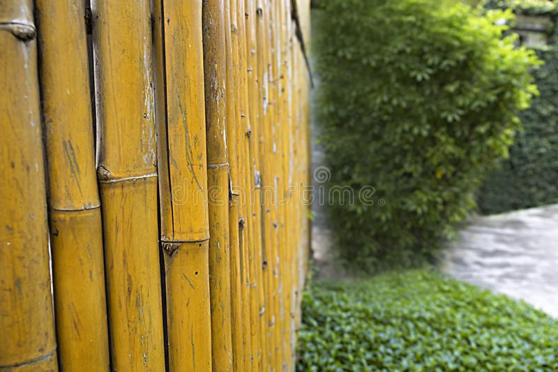 Uma cerca feita das hastes, tresniowski das palhas que cresce de bambu em Vietname, a textura da casca fotos de stock royalty free