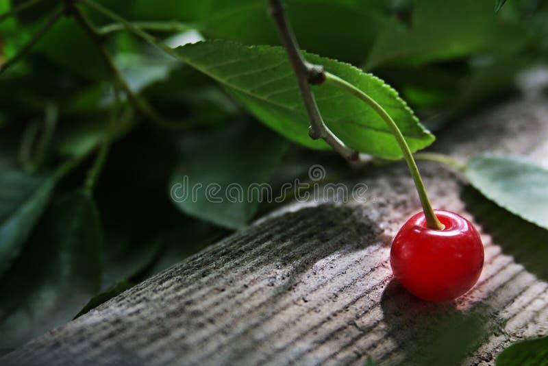 Uma cereja com cereja ramifica no telhado foto de stock