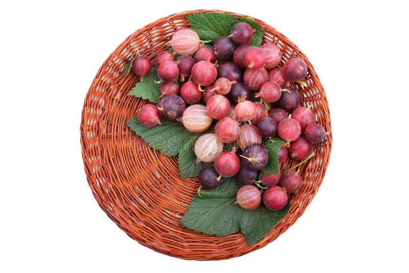Uma cesta de madeira marrom completamente de groselhas multi-coloridas suculentas com as folhas frescas do verde, isolado em um f imagem de stock royalty free
