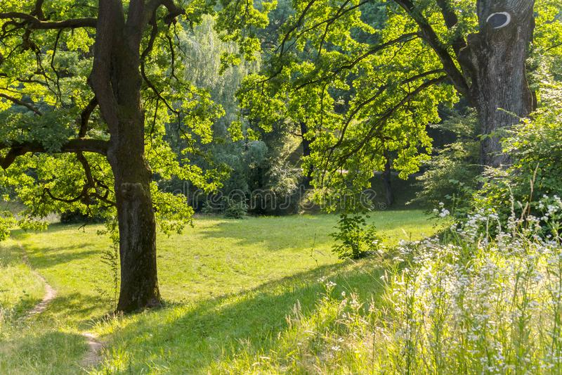 Uma clareira verde maravilhosa da floresta entre duas árvores enormes Lugar para o piquenique e o resto foto de stock royalty free