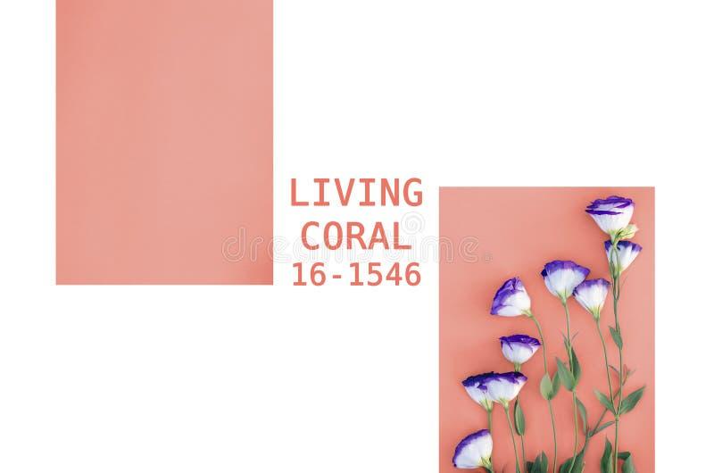 Uma colagem das fotos na cor que vive em 2019 o coral fotografia de stock royalty free