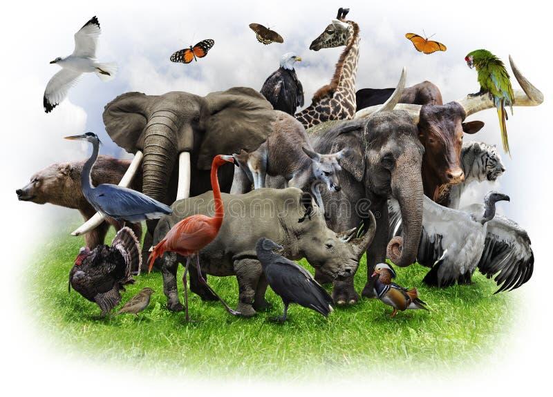 Colagem dos animais imagens de stock