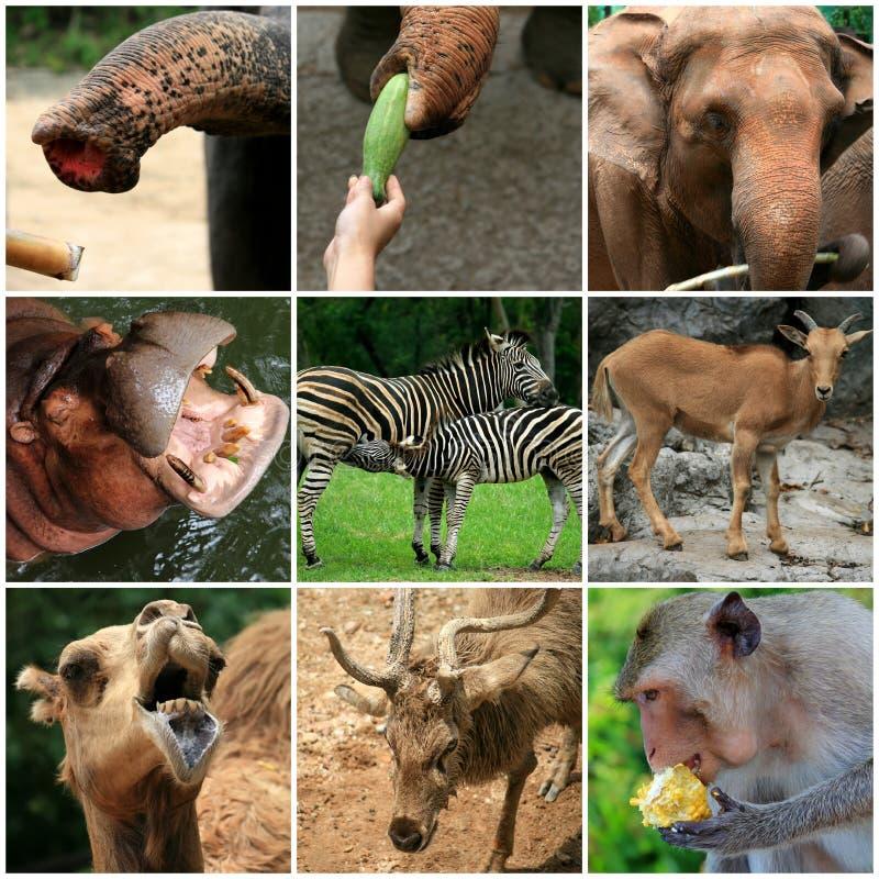 Uma colagem dos animais do jardim zoológico foto de stock royalty free