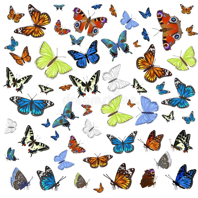 Uma coleção das borboletas diferentes que voam e assentadas Isolado no fundo branco Gr?ficos de vetor ilustração royalty free