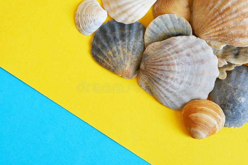Uma coleção das conchas do mar em um azul diagonal e em um fundo amarelo, simbolizando o mar e a areia na praia Curso e turismo fotografia de stock royalty free