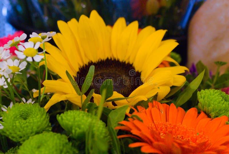 Uma coleção das flores coloridas que florescem no verão imagem de stock
