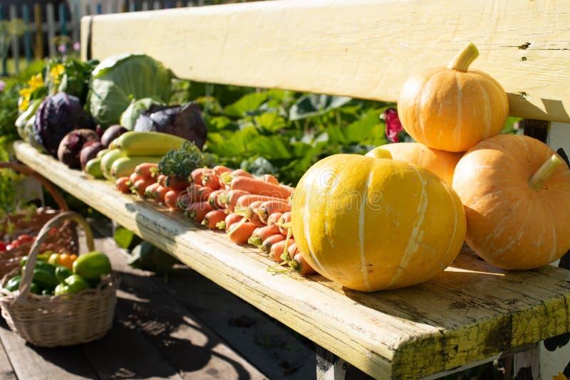 Uma colheita de legumes frescos encontra-se em um banco no ar livre fotografia de stock royalty free