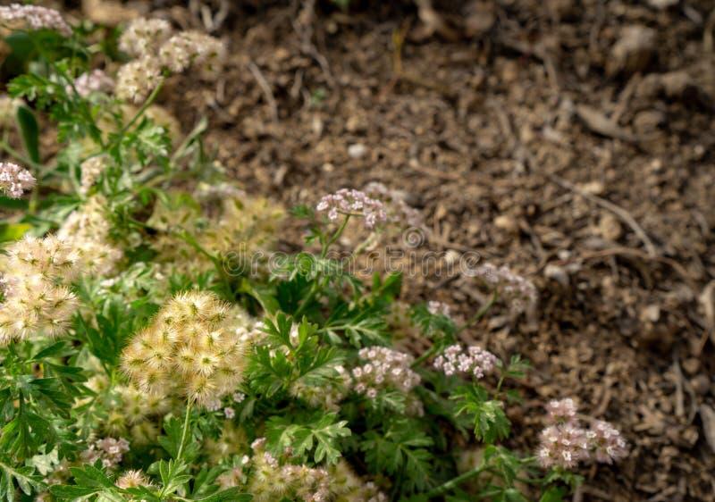 Uma combinação verde da flor em um jardim imagens de stock royalty free