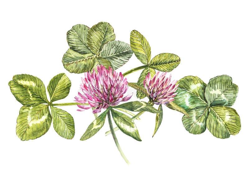 Uma composição de flores do trevo e das folhas vermelhas - um quatrefoil e um trevo Ilustrações botânicas da aquarela feliz ilustração royalty free
