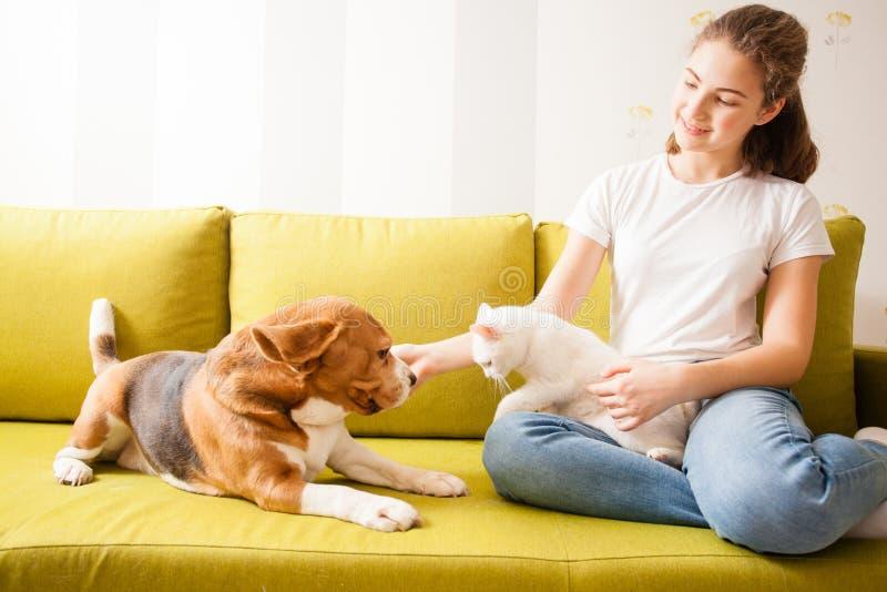 Uma comunicação de animais no sofá imagens de stock royalty free