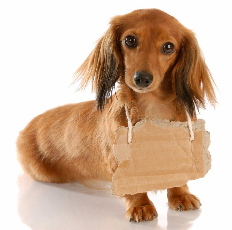 Uma comunicação do cão fotos de stock royalty free