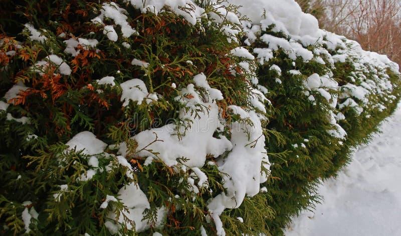 Uma conversão de arbustos verdes imagens de stock royalty free