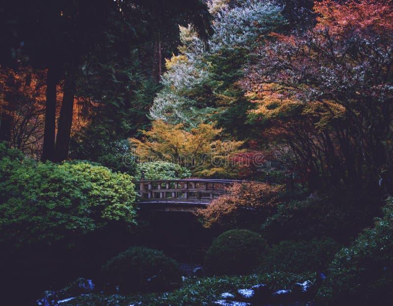 Uma cor mostra fora durante o tempo de queda nos jardins do japonês de Portland foto de stock