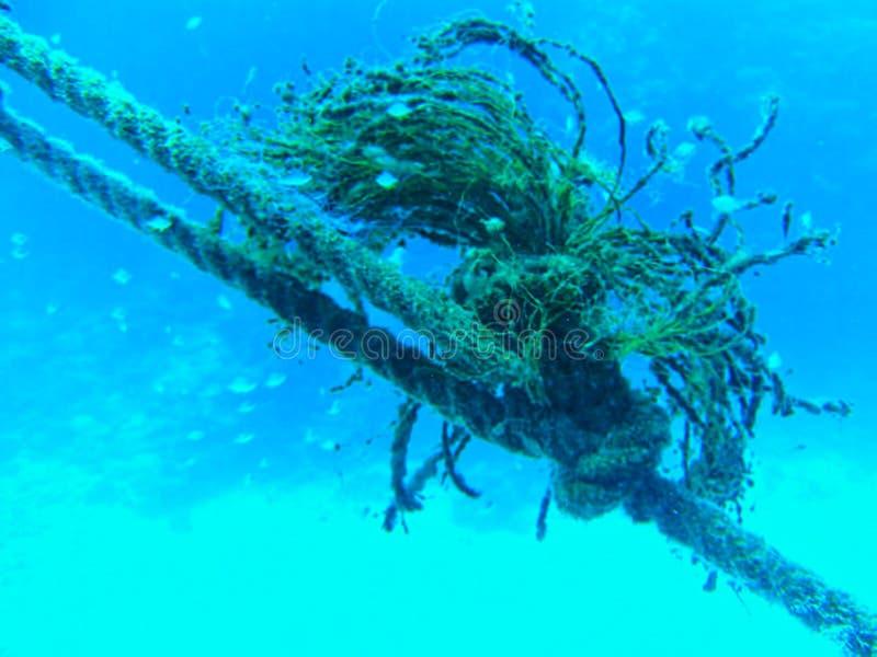 uma corda com plantas debaixo d'água fotografia de stock royalty free