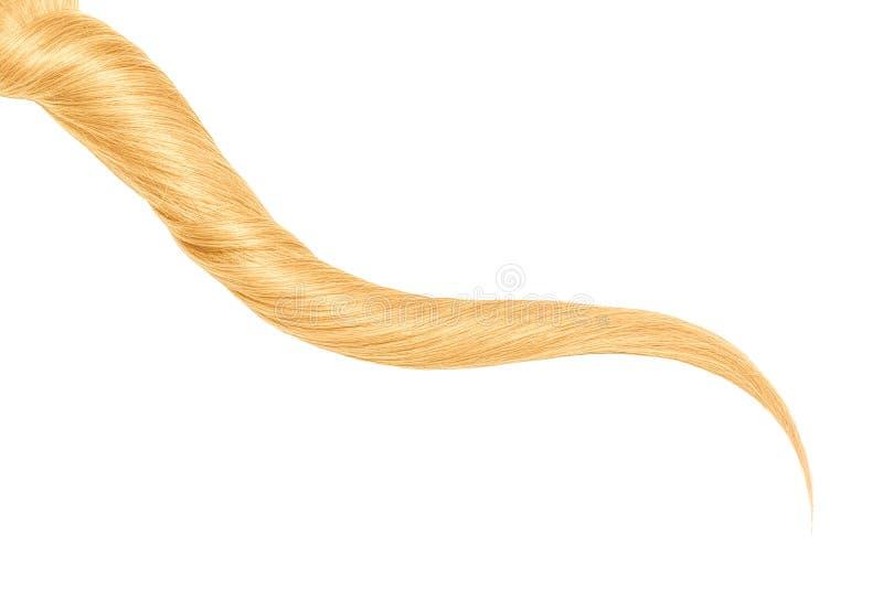Uma costa do cabelo longo, torcido, louro isolado no fundo branco fotografia de stock