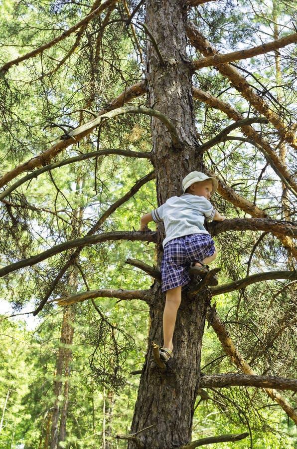 Uma criança escalada em um in-field da pinho-árvore. foto de stock royalty free