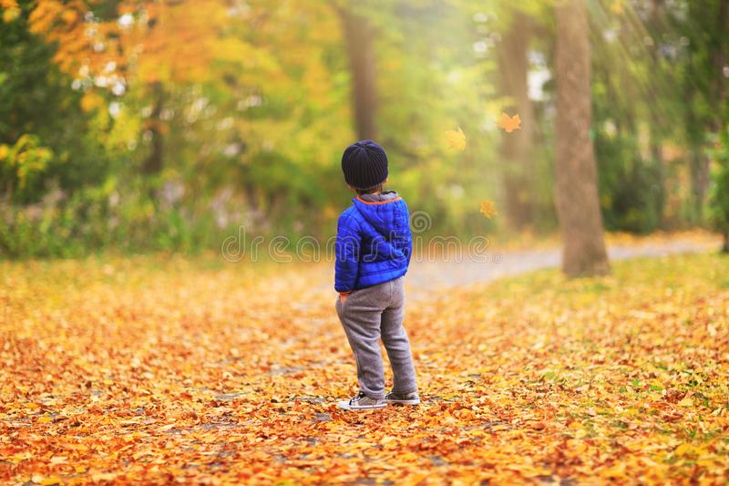 Uma criança está olhando cair das folhas as árvores durante a queda fotos de stock