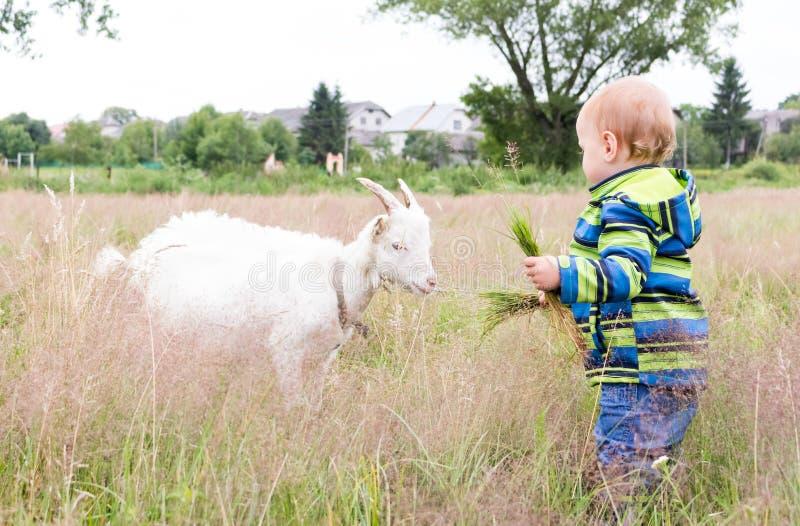 Uma criança pequena está alimentando uma cabra fotos de stock